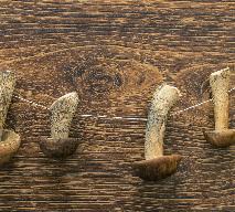 Suszenie grzybów na kaloryferze: jak to zrobić?
