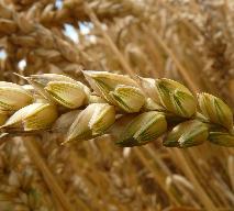 Gluten - czym jest? Jakie są objawy alergii na gluten?