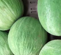 Melon BARATTIERE: co to za odmiana melona, jak ją wykorzystać kulinarnie