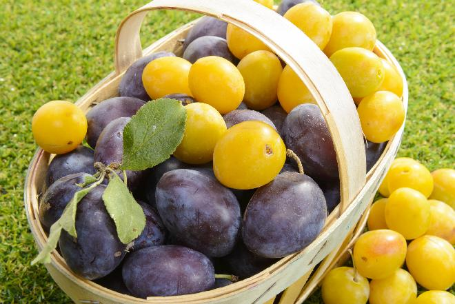 ŚLIWKI: witaminy, wartości odżywcze i właściwości kulinarne